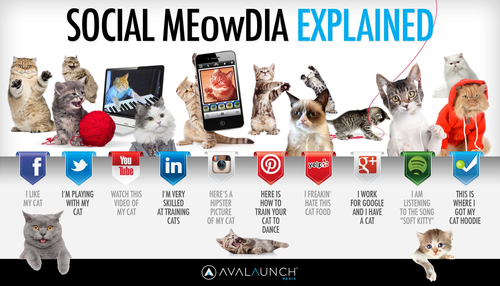 Social-Cats